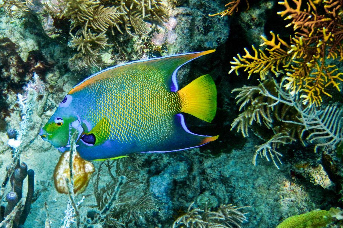 Fisch im Belize Barriere Riff, Belize - © Sharon K. Andrews / Shutterstock
