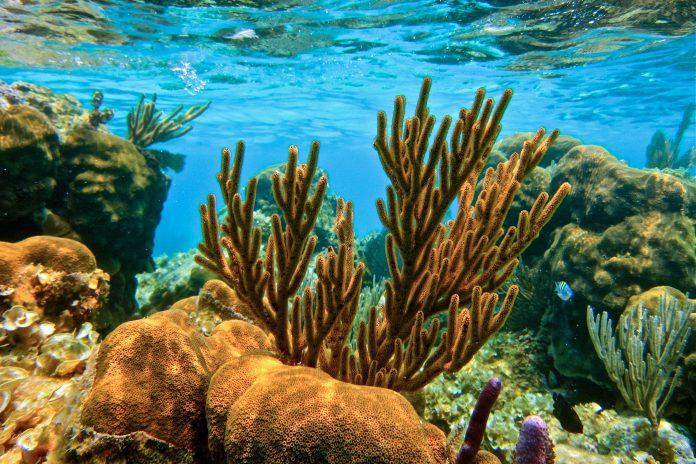 Korallen im Belize Barriere Riff, Belize - © Sharon K. Andrews / Shutterstock