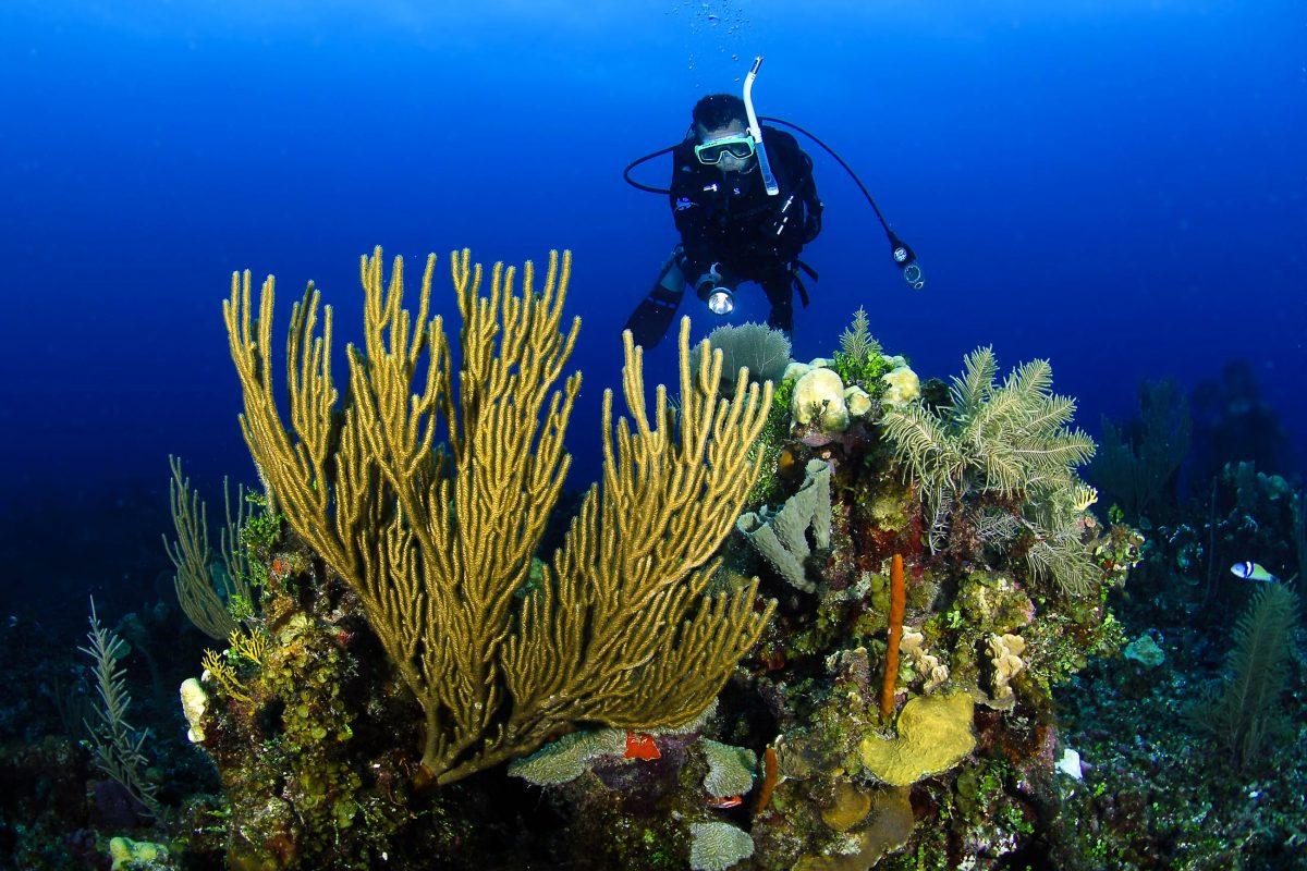 Taucher im Belize Barriere Riff, Belize - © Luiz A. Rocha / Shutterstock