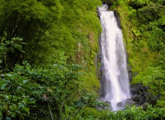 """Die Trafalgar-Fälle auf der karibischen Insel Dominica bestehen aus zwei Wasserfällen, hier der """"Mutter-Wasserfall"""" - © Kendra Nielsen / Shutterstock"""