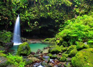 Nur 15min vom Eingang des Morne-Trois-Pitons-Nationalparks entfernt liegt der märchenhafte Emerald Pool, Dominica - © Sorin Colac / Shutterstock