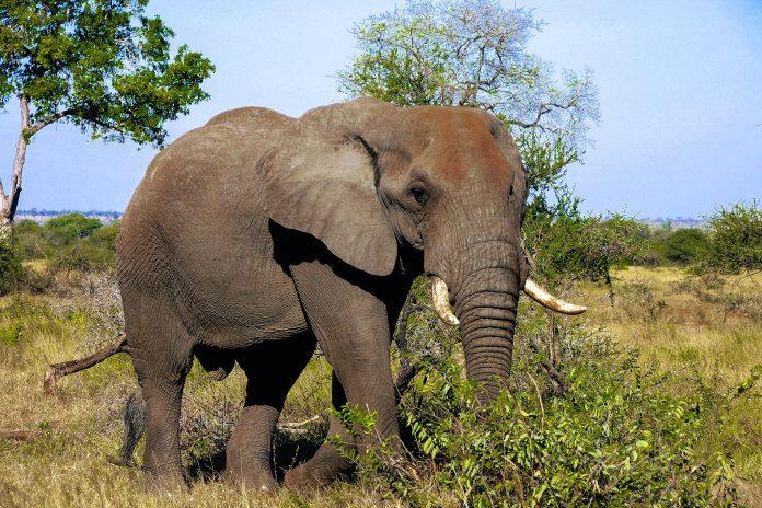 Der Maputo-Elefantenpark in Mosambik lockt Besucher mit seiner wilden, unberührten Landschaft und den über 300 Elefanten, die im Park leben - © cptsai / Shutterstock