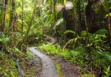 Weg im El Yunque National Forest in Puerto Rico - © IrinaK / Shutterstock