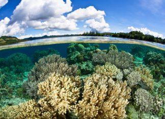 Die Insel Renell gehört zu den Salomonen-Inseln und wurde. aufgrund seiner unberührten Natur zum Weltnaturerbe der UNESCO erklärt - © Ethan Daniels / Shutterstock