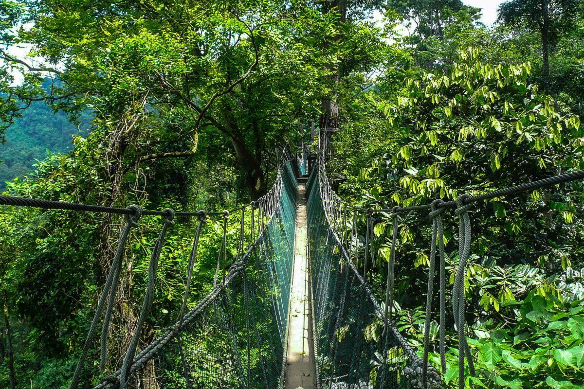 Der 40m über dem Waldboden angebrachte Canopy Aerial Walkway ist das Highlight im Falealupo-Rainforest-Reserve auf Samoa - © Atosan / Shutterstock