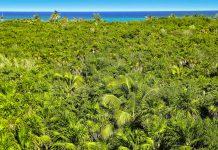 Zwischen den zahlreichen Palmen am Tia Seu Ancient Mound auf der Insel Samoa verstecken sich die ältesten von Menschen geschaffenen Strukturen ganz Polynesiens - © holbox / Shutterstock