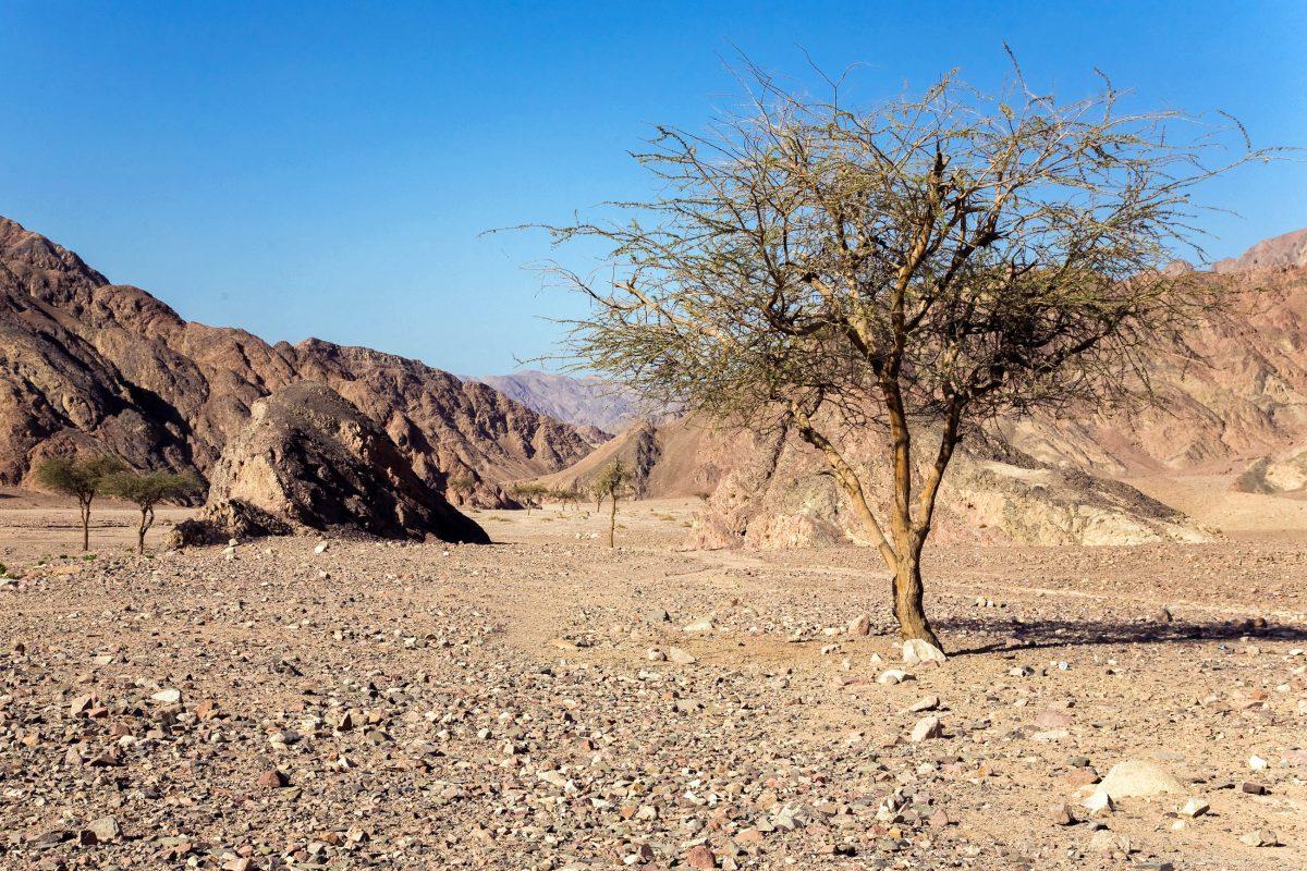 Der Gebel-Elba Nationalpark im Südosten Ägyptens an der Grenze zum Sudan und Roten Meer beeindruckt durch seine in Ägypten einzigartige Tier- und Pflanzenwelt - © Denis Krasnoukhov / Shutterstock