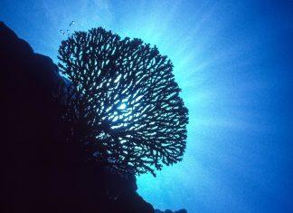 Im Süden von Ofu-Olosega wird die fantastische Unterwasserwelt des Pazifiks  durch den Nationalpark von Amerikanisch-Samoa geschützt - © J'nel / Shutterstock