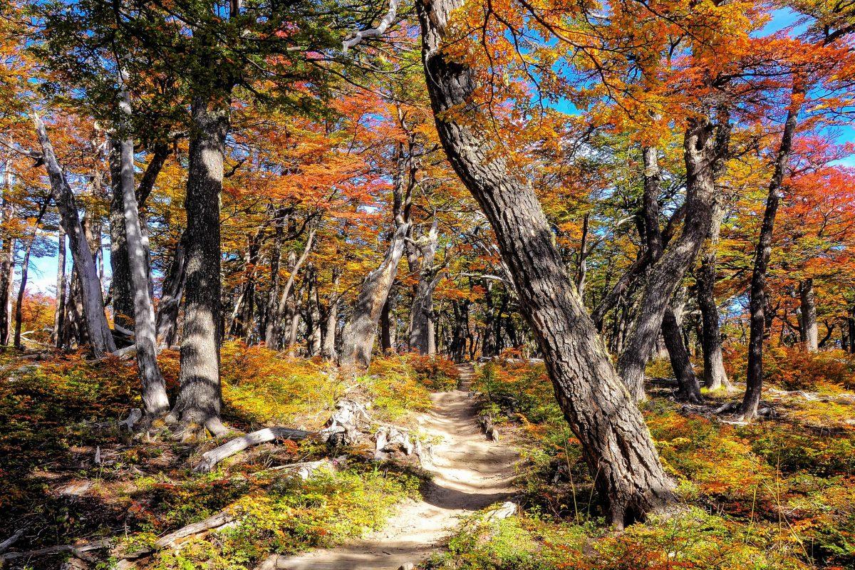 Durch den atemberaubenden Los Glaciares Nationalpark in Argentinien führen zahlreiche Wanderwege - © Serjio74 / Shutterstock