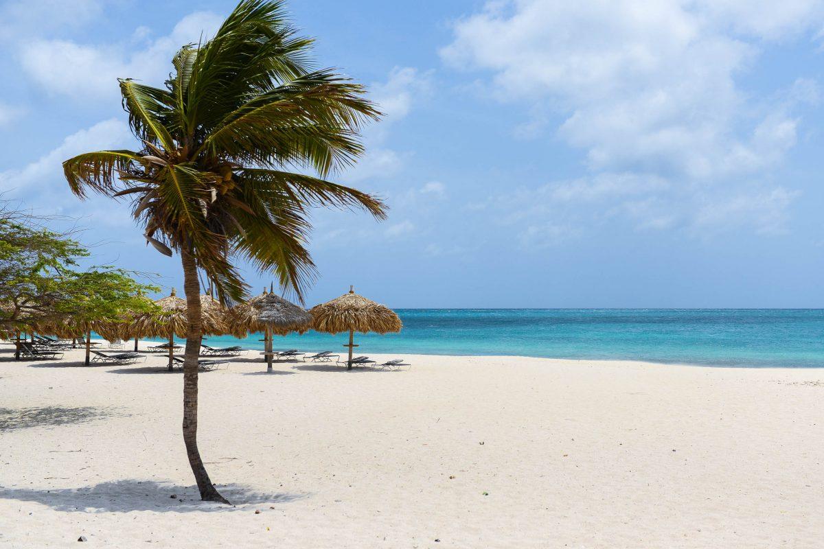 Türkisblaues Meer, feiner Sand und Schatten unter Palmen am Eagle Beach auf Aruba - © James Camel / franks-travelbox