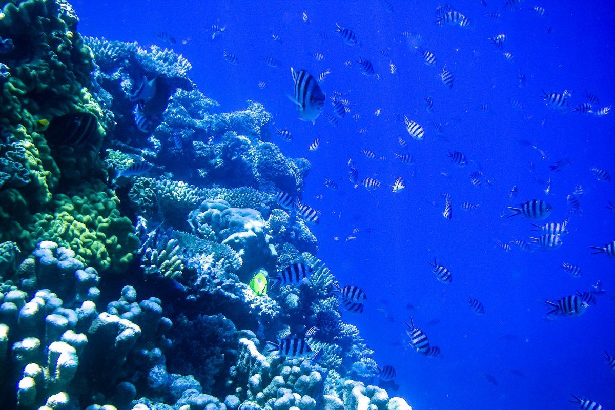 Das Great Barrier Reef besteht aus mehreren tausend Einzelriffen, zahlreichen kleinen Inseln und einer Vielzahl an Sandbänken; 1.500 Fischarten haben hier ihren Lebensraum, Australien - © ezk / franks-travelbox