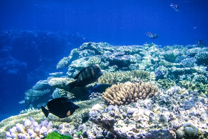 Das Great Barrier Reef vor der Nordost-Küste Australiens ist das größte Korallenriff der Welt und zieht jährlich 2 Millionen Besucher an - © ezk / franks-travelbox