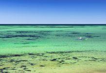 Die Shark Bay mit ihren riesigen Seegras-Flächen ist ein idealer Lebensraum für Delfine, Seekühe, Meeresschildkröten, Rochen, Wale und jede Menge an Fischen und Krebsen, Australien - © swissdoc / Fotolia