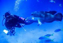 Ein Taucher im Great Barrier Reef im australischen Bundesstaat Queensland, dem größten Korallenriff der Welt mit einer Länge von über 2.000 km, Australien - © ezk / franks-travelbox