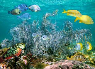 Über 225km erstreckt sich das farbenprächtige Korallenriff der Insel Andros, Bahamas - © Vilainecrevette / Shutterstock