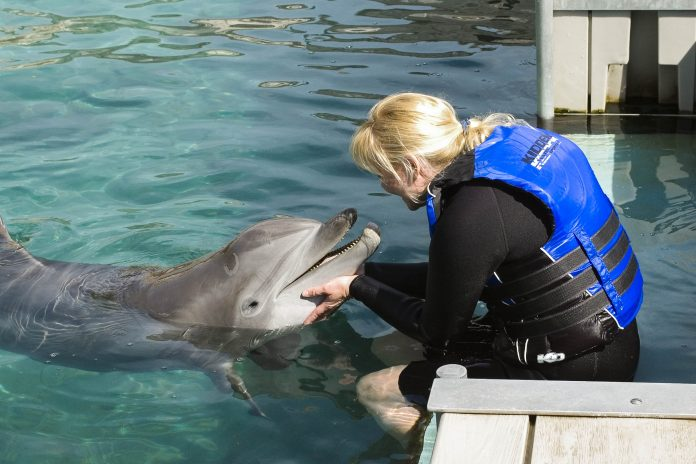 Eine Frau mit Delfin, Dolphin Quest, Bermuda - © Blair Howard / Fotolia