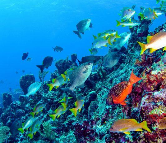 Nur wenige Meter von der Küste entfernt befindet sich ein farbenprächitges Korallenriff, Snorkel Park Beach, Bermuda - © Amanda Nicholls / Shutterstock