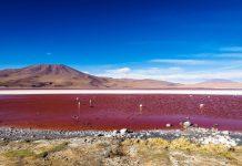 Die Laguna Colorada im äußersten Südwesten von Bolivien begeistert durch seine spektakuläre Färbung und Schwärme von Flamingos - © insideout78 / Shutterstock