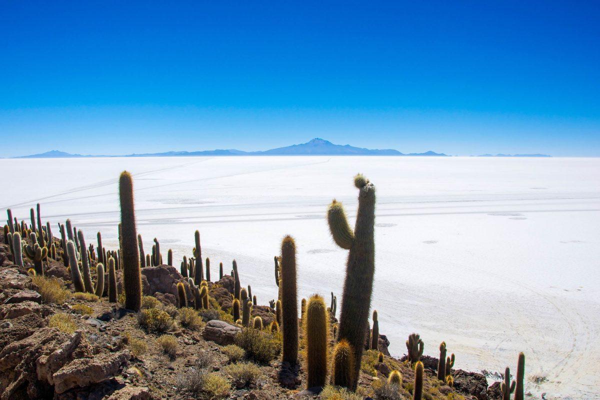 Incahuasi bedeutet übersetzt Haus des Inka und bezeichnet die rund 25 Hektar große Insel auf dem Salar de Uyuni in Bolivien - © flog / franks-travelbox.com