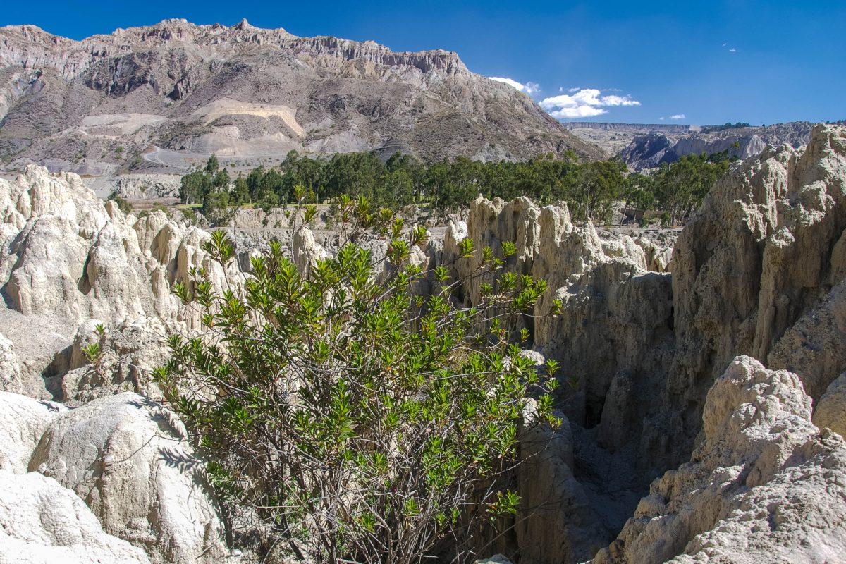Nach der Regenzeit von Jänner bis März erscheint das Valle de la Luna oft in einem neuen Gesicht, Bolivien - © flog / franks-travelbox