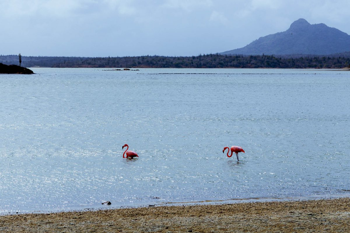 Am Salzsee Goto-Meer am Rand des Washington Slagbaai Nationalparks sind Flamingos zu beobachten, Bonaire - © James Camel / franks-travelbox
