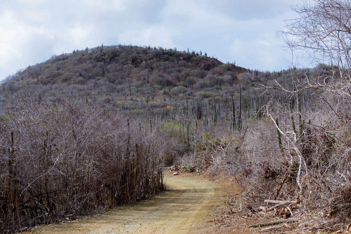 Die Flora des Washington Slagbaai Nationalparks ist geprägt von weitläufigen Kakteenwäldern, darunter einige seltene Riesen-Kakteen, Bonaire - © James Camel / franks-travelbox