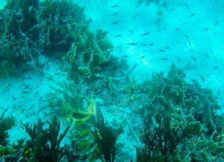 Die Tauchgründe rund um die karibische Insel Bonaire zählen zu den bestgeschützten und ursprünglichsten der Welt - © Lila Pharao / franks-travelbox