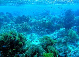 Die vorgelagerte Mini-Insel Klein Bonaire nennt ein atemberaubendes Korallenriff ihr Eigen - © Lila Pharao / franks-travelbox