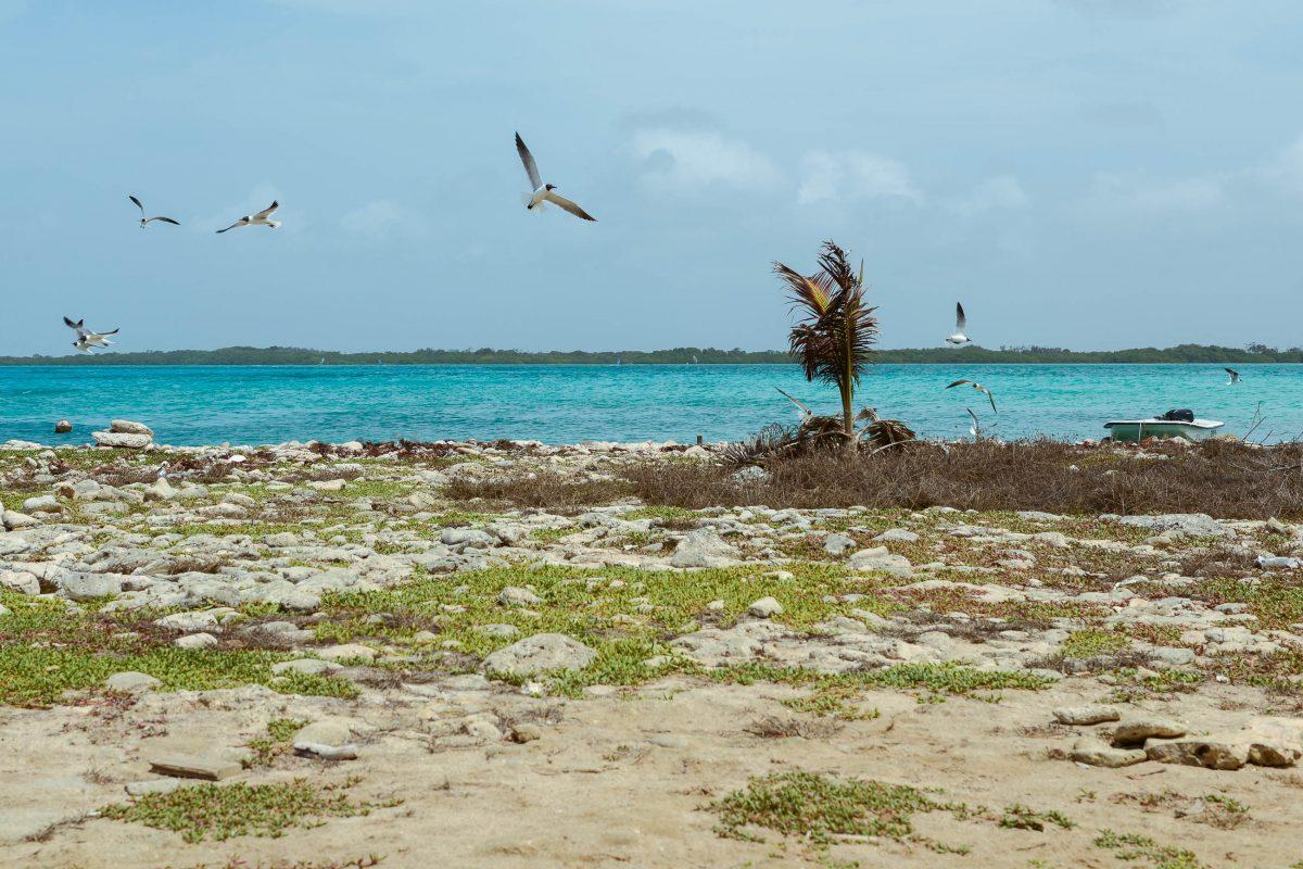 Fernab vom Trubel ist man an der Halbinsel Cai oft fast alleine und kann die idyllische Umgebung von Lac Bay in aller Ruhe genießen, Bonaire - © James Camel / franks-travelbox