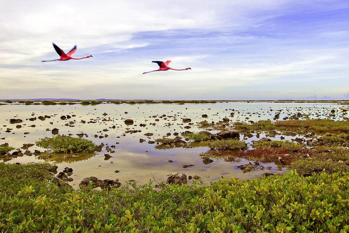 Fliegende Flamingos an der Südküste Bonaires - © Kjersti / Fotolia