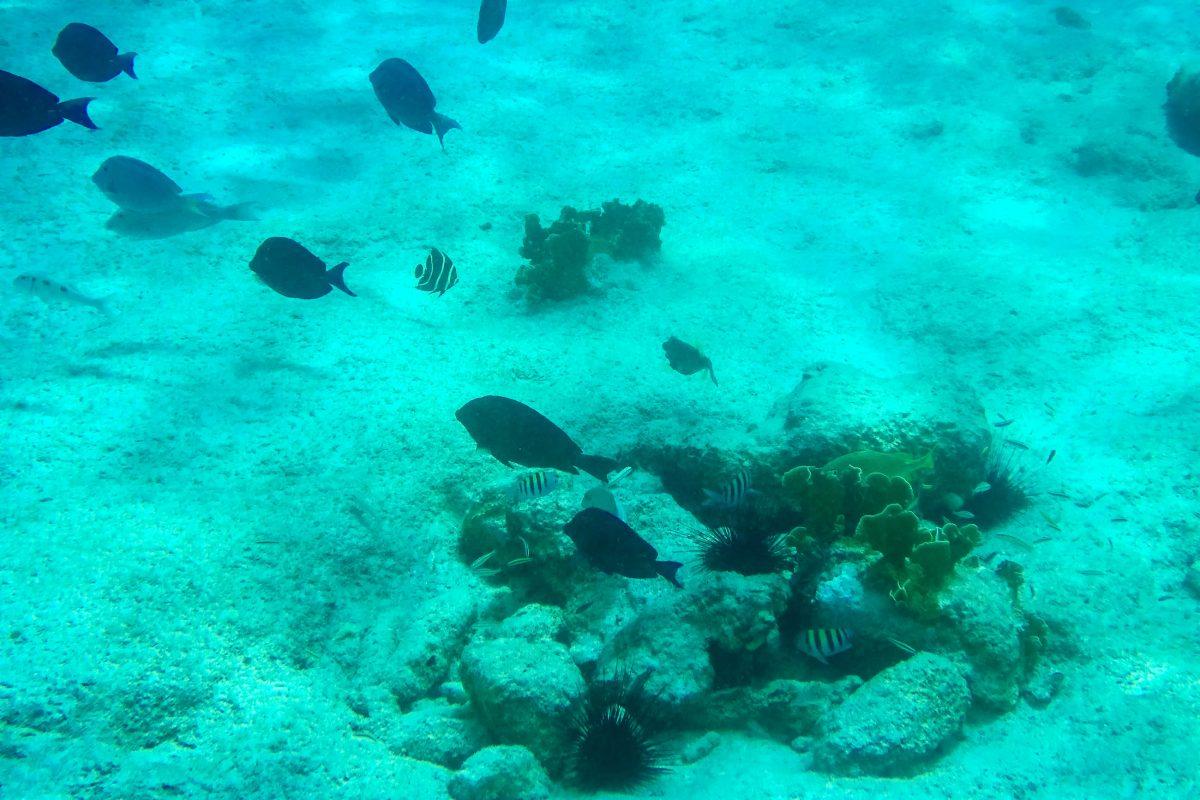 """Reges Meeres-Treiben am Tauchspot """"Salt Pier"""" im Süden von Bonaire - © Lila Pharao / franks-travelbox"""