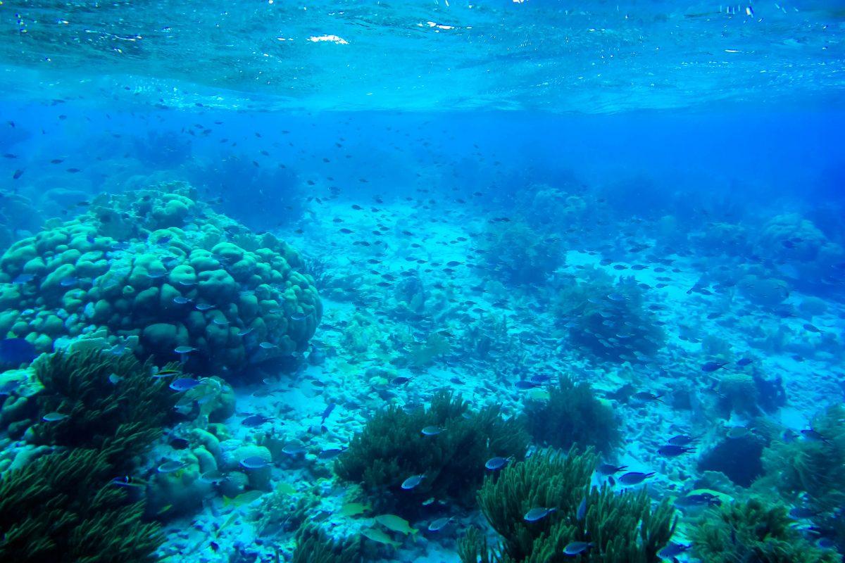 Um Klein Bonaire zieht sich eines der spektakulärsten Korallenriffe der Welt, das in knapp 30 ausgewiesenen Tauchspots erkundet werden kann - © Lila Pharao / franks-travelbox