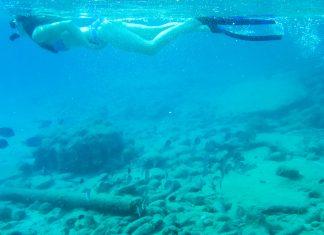 """Vom """"Bari Reef"""" entlang der Küste Richtung Süden bis nach Kralendijk können zwischen den vertäuten Booten zahlreiche Meeresbewohner beobachtet werden, Bonaire - © Lila Pharao / franks-travelbox"""