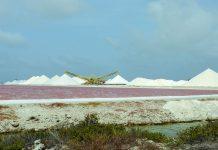 Vor der prächtigen Kulisse der Salzfelder von Pekelmeer sind hie und da Flamingos auszumachen, die im nahe gelegenen Flamingo Sanctuary nisten, Bonaire - © James Camel / franks-travelbox