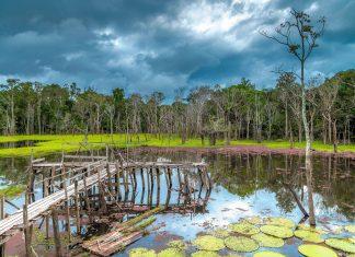 Allradfahrzeuge sind im Pantanal auch abseits der Regenzeit sehr empfehlenswert, da es kaum befestigte Straßen gibt, Brasilien - © Filipe Frazao / Shutterstock