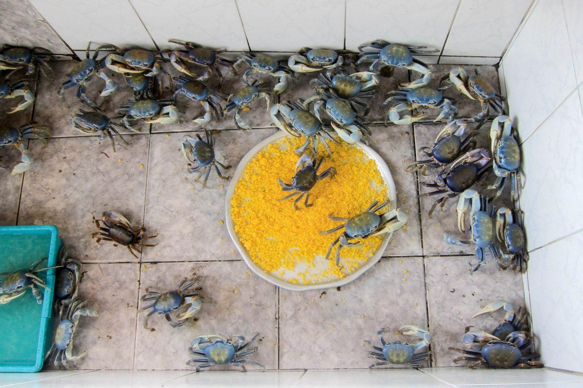 Neben Krabben servieren die Lokale an den Stränden um Aracaju auch andere lokale Spezialitäten rund um Fisch und Meeresfrüchte, Brasilien - © FRASHO / franks-travelbox