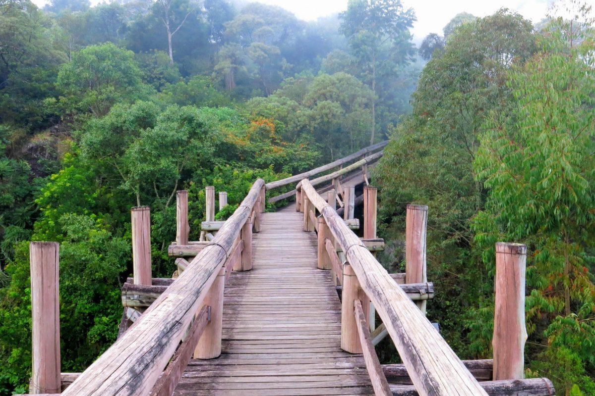 Auf Ökowanderwegen lässt sich der ansonsten undurchdringliche Regenwald des Amazonasbeckens auf bequeme Weise erkunden, Brasilien - © NikoNomad / Shutterstock
