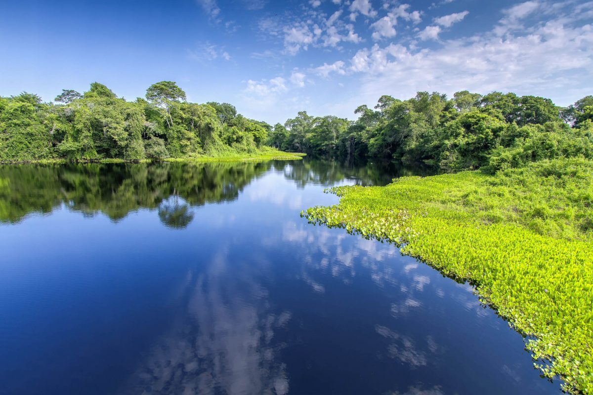 Das Pantanal liegt im Zentrum von Südamerika und ist das größte zusammenhängende Binnenland-Sumpfgebiet der Erde, Brasilien - © AJancso / Shutterstock