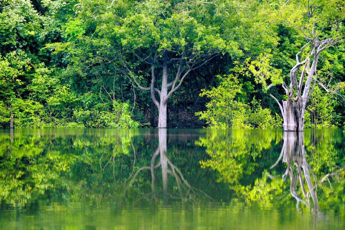 Im Amazonasbecken ist man umgeben von einer Mischung aus gigantischen Bäumen, prachtvollen Palmen und exotischen Geräuschen, Brasilien - © achiaos / Shutterstock