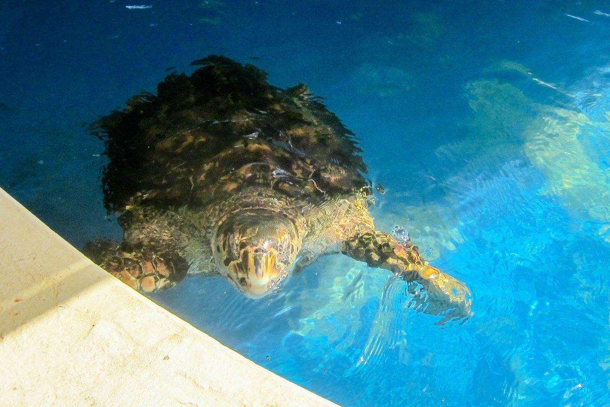 Berühmt Meeresschildkröte Färbung Seite Bilder - Beispiel Business ...