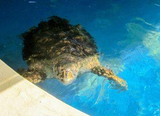 Die Besucherstationen des Projeto TAMAR informieren über das Leben der Meeresschildkröten an Brasiliens Küste - © FRASHO / franks-travelbox