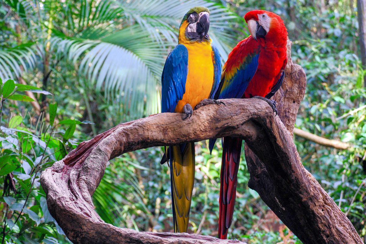 Sagenhafte Atmosphäre ist garantiert, wenn man all seine Sinne mit dem Regenwald des Amazonasbeckens verschmelzen lassen kann, Brasilien - © Harald Toepfer / Shutterstock