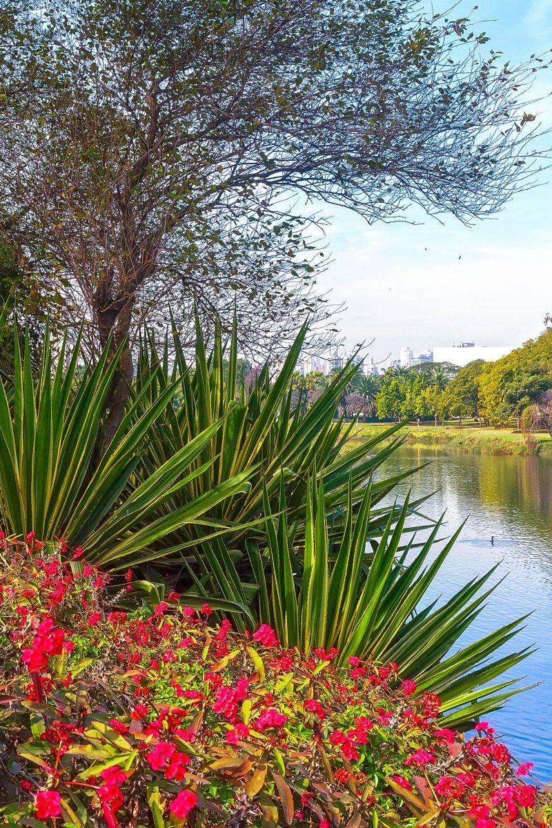 Blühende Vegetation im Ibirapuera-Park in Sao Paulo, Brasilien - © Ivan Pavlov / Shutterstock