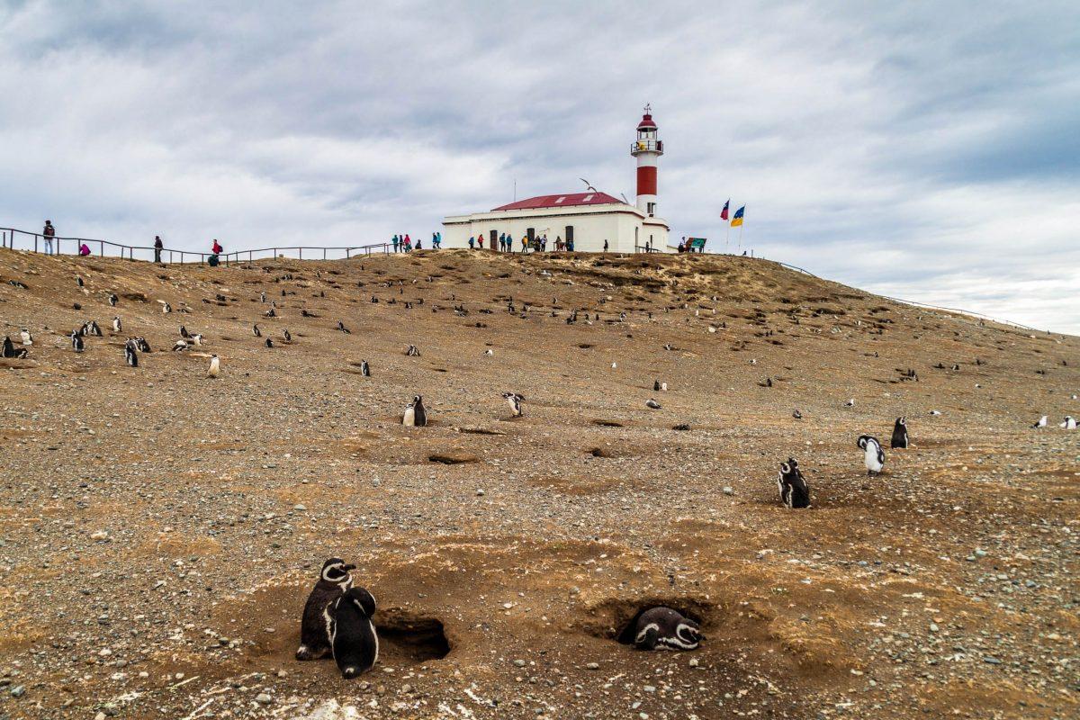 Abgesehen von den Pinguinen gibt es auf Isla Magdalena bei Chile keine Sehenswürdigkeiten, lediglich einen rot-weiß-roten Leuchtturm - © Matyas Rehak / Shutterstock