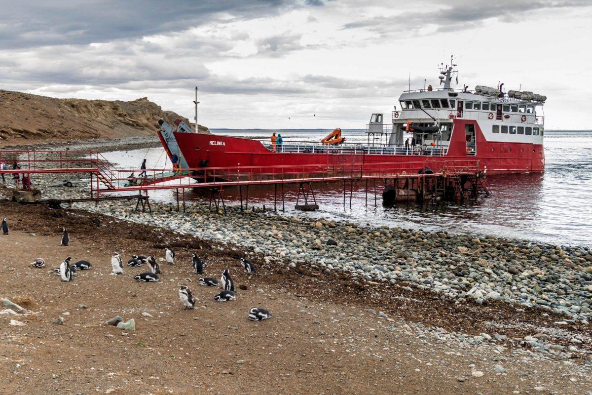 Die gut halbstündige Überfahrt zur Isla Magdalena erfolgt mit der Fähre und ist aufgrund des niedrigeren Wellengangs nur in der Früh möglich, Chile - © Matyas Rehak / Shutterstock