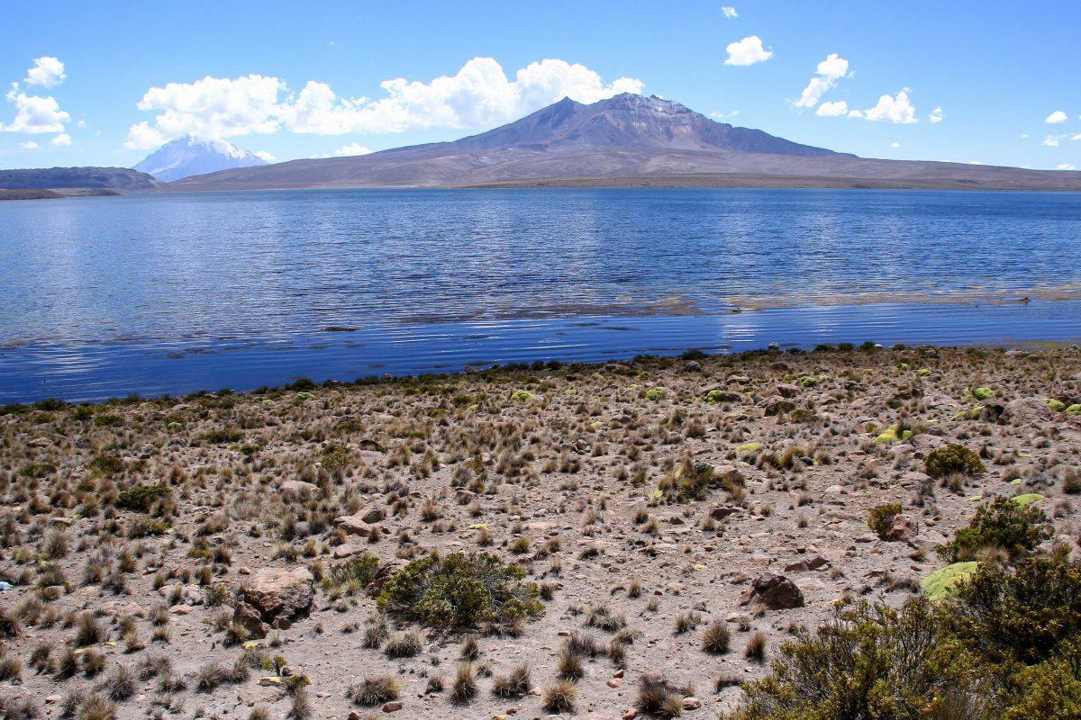 Etwa zwölf Kilometer von der bolivianischen Grenze entfernt befindet sich der Lago Chungará, der mit ca. 4.600 Metern Seehöhe zu den höchst gelegenen Seen der Erde gehört, Chile - © ezk / franks-travelbox