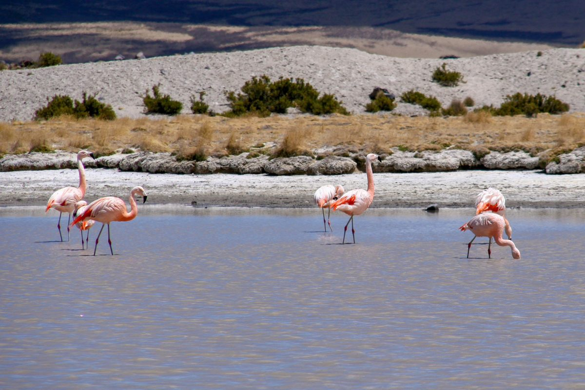 Flamingos im Lauca Nationalpark in Chile - © ezk / franks-travelbox