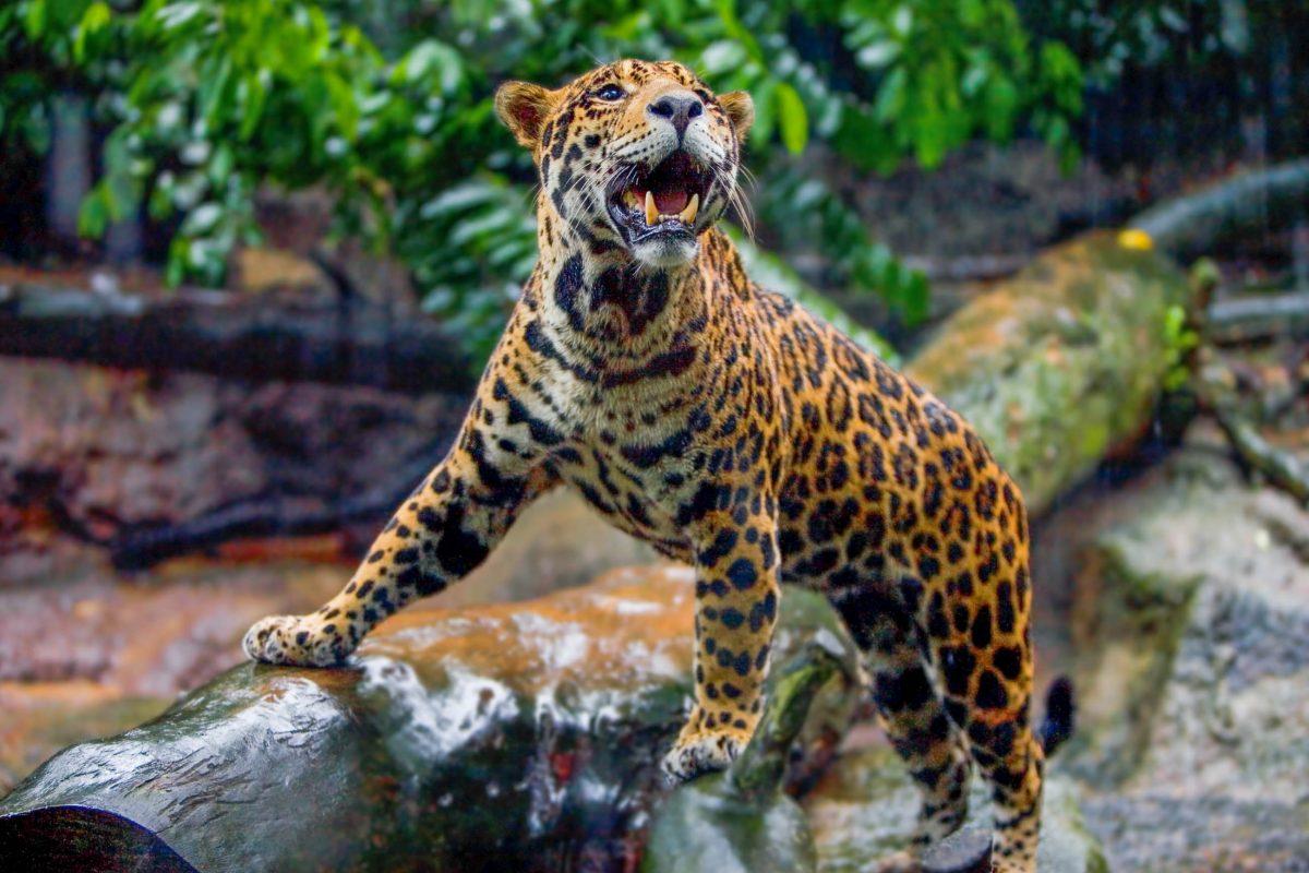Auf einer Fläche von knapp 5 Hektar beherbergt der Nationale Zoo von Chile im Parque Metropolitano von Santiago rund 160 verschiedene Tierarten - © Juriah Mosin / Shutterstock