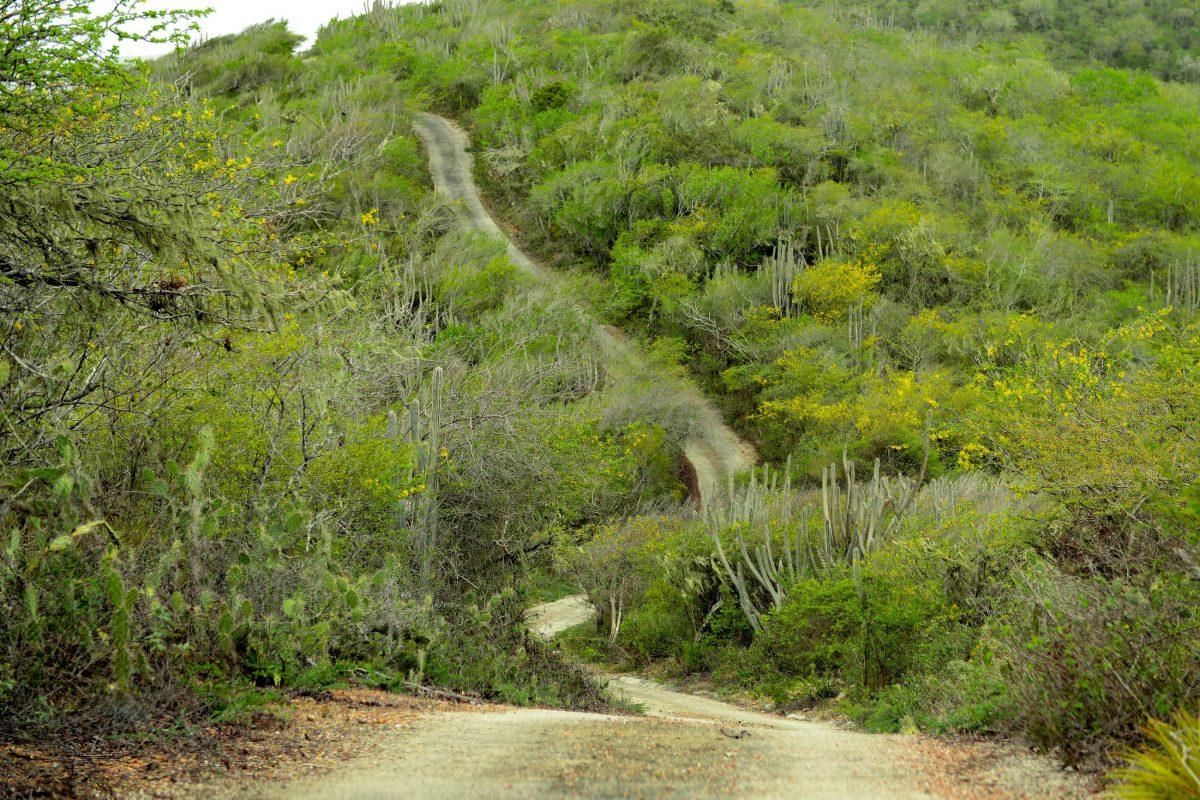 Die Straßen der drei Autorouten durch den Christoffelpark sind steil und eng, können jedoch mit dem normalen PKW befahren werden, Curaçao - © James Camel / franks-travelbox