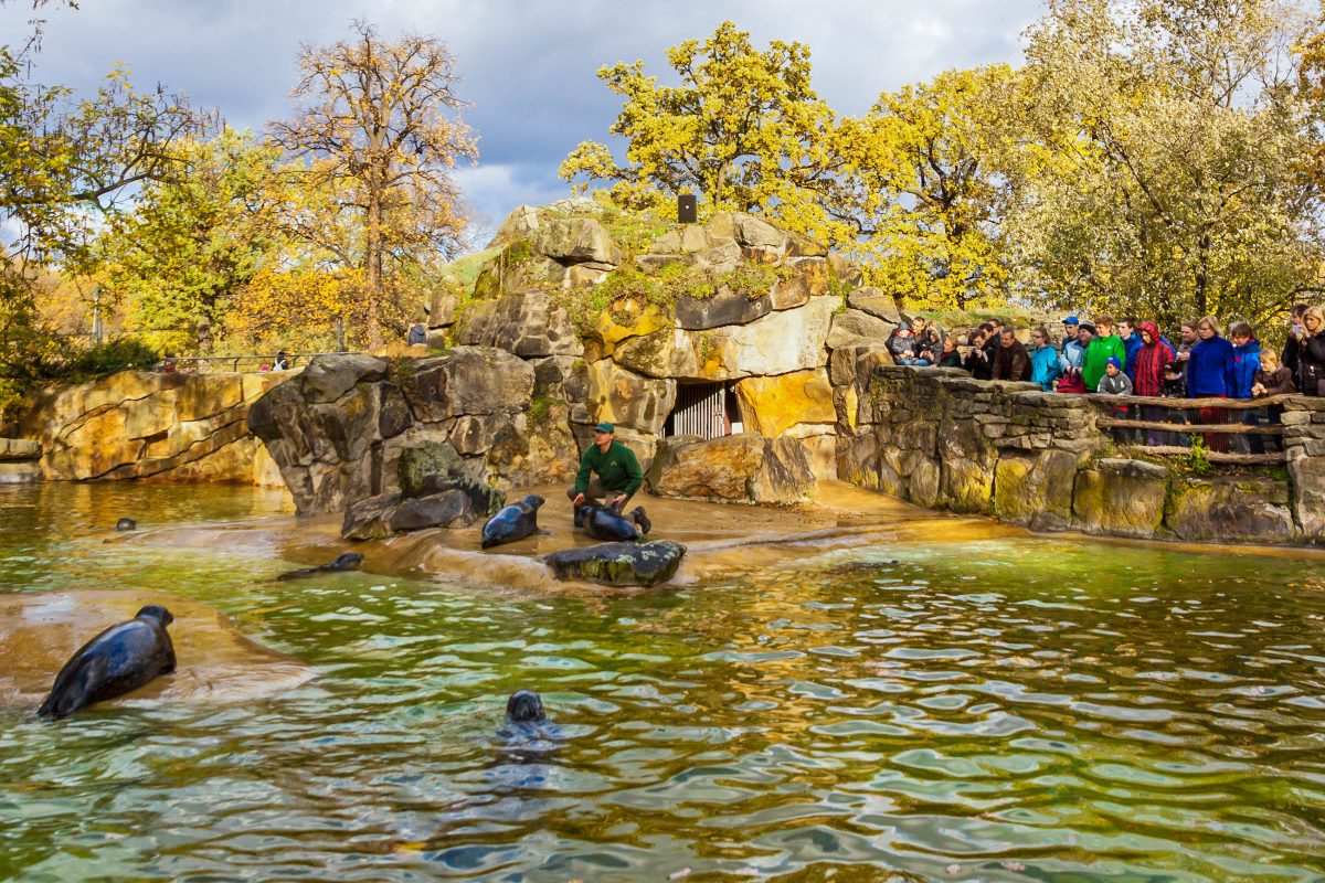 Seelöwenfütterung im Berliner Zoo, dem ältesten Zoo Deutschlands - © katatonia82 / Shutterstock
